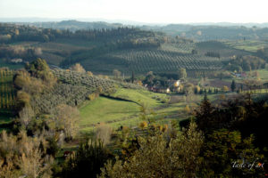 paesaggio intorno San Miniato