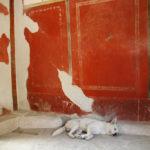 Taste of Art - Pompei cane